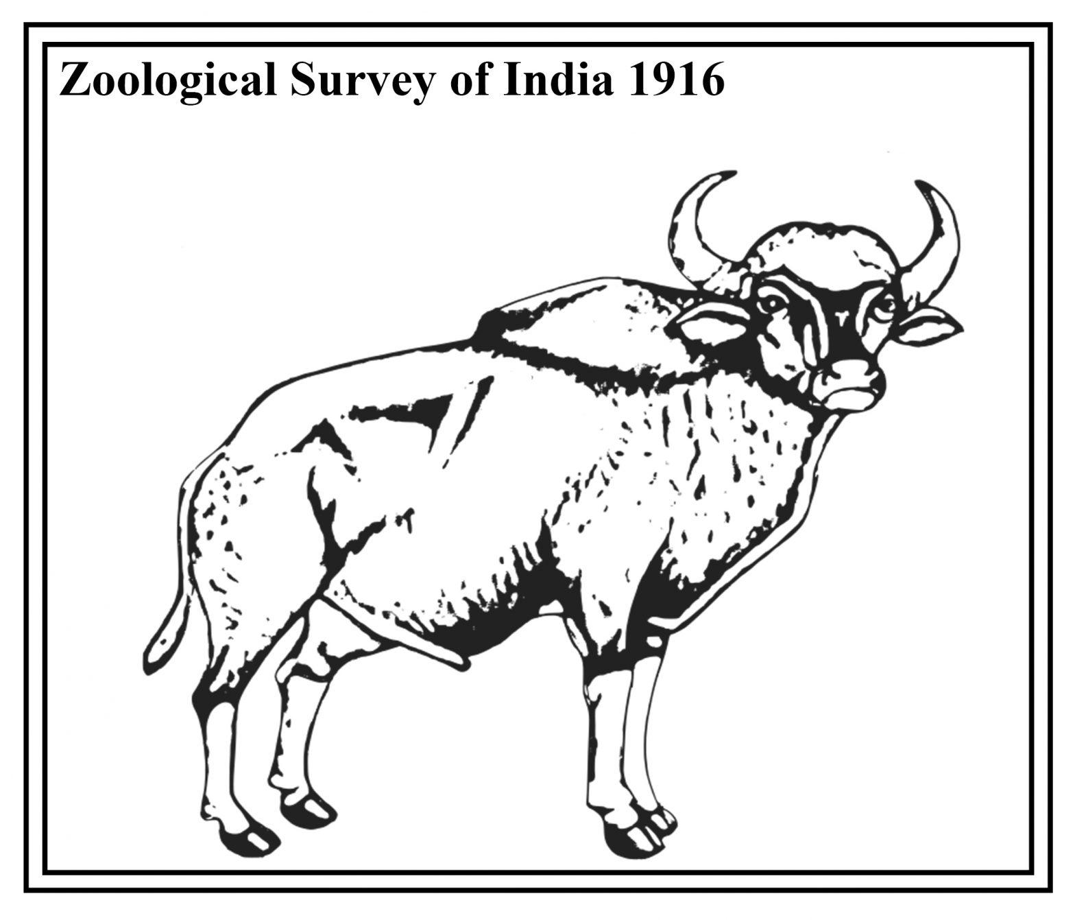 Zoological Survey of India gets 1st female director in 100 years_40.1