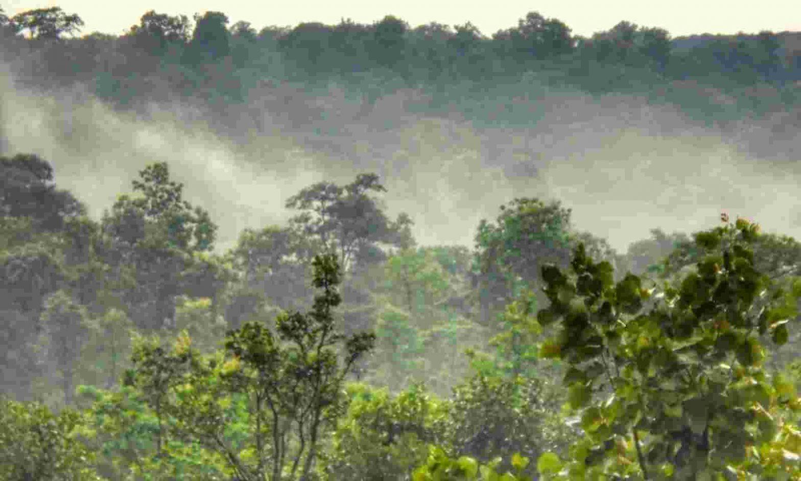 Chhattisgarh becomes 1st state to recognise Forest Resource Rights in Urban Region_40.1