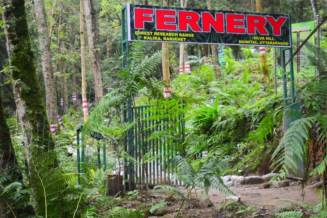 India's largest open air fernery opened in Uttarakhand_40.1