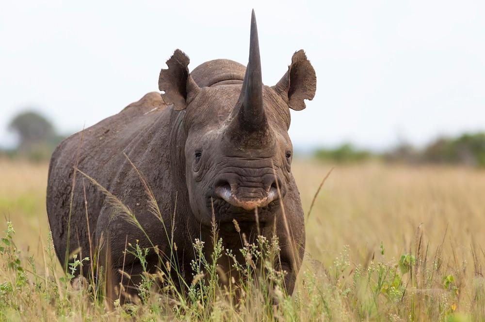 World Rhino Day observed on 22 September_40.1