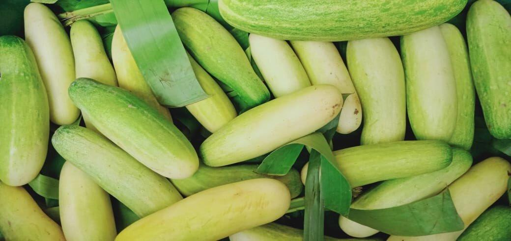 Naga Cucumber from Nagaland gets geographical identification tag_40.1